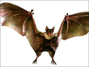 Infected Bat